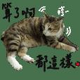 Fei Fei Meow 2
