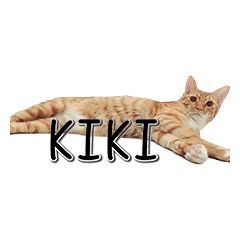 橘喵Kiki之日常用語