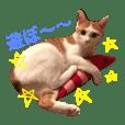 日常で使える猫スタンプ with mii