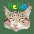Poli貓貓大人-日常篇