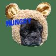 FrenchBulldog-masao
