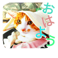 Love*Cat 2