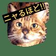 ベンガル猫 ぱるこ&まーぶるの日常