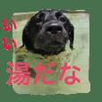 黒ラブびーたん&チョコラブケリー2