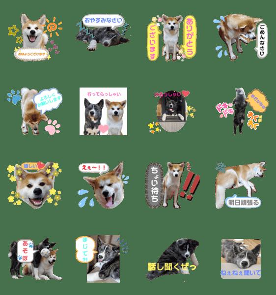 「秋田犬 杏 蓮」のLINEスタンプ一覧