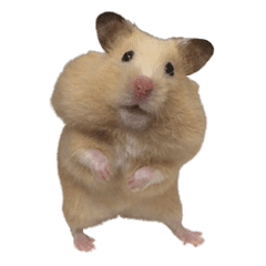 薯餅:黃金鼠鼠-嘟嘟的小夥伴