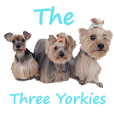 The Three Yorkies (EN)