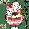 【Big】シーズー犬34『sweets どーぞ』