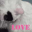 My cat`s name LOVE.