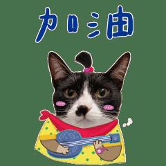 Sushi&Wasabi壽司與哇沙米 賓士貓與玳瑁貓