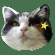 No cat, No life.  Kinshiro,Mike,Arashi