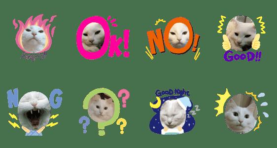 「ネコのスタンプ(白)」のLINEスタンプ一覧