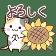 お茶目な三毛猫【夏】