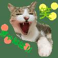 kinako and friends Cat