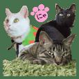 CATS 1000%
