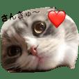 osaka cat coco