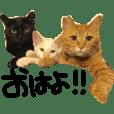 Go go! 3 Meows