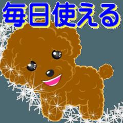 Poodle-001
