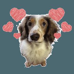 cute dog goofy sticker