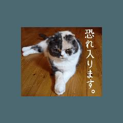 arinoko3_20210724102031
