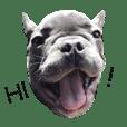 Mavic Dog