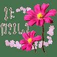 秋に使える言葉などにコスモスの花を添えて
