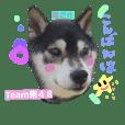 Team柴48 no.2