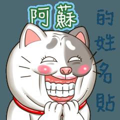 阿蘇_專屬的搞怪貓咪