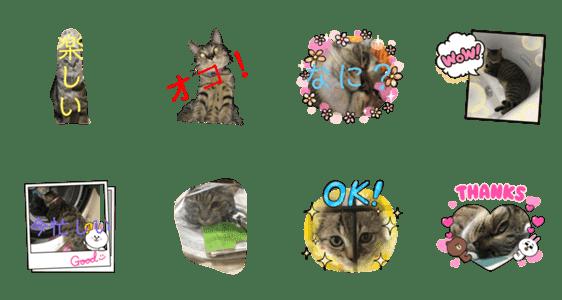 「かわいい猫 動物」のLINEスタンプ一覧