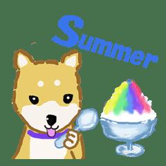 夏!柴いぬ