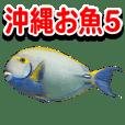 Okinawa's saltwater fish 5