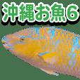 Okinawa's saltwater fish 6