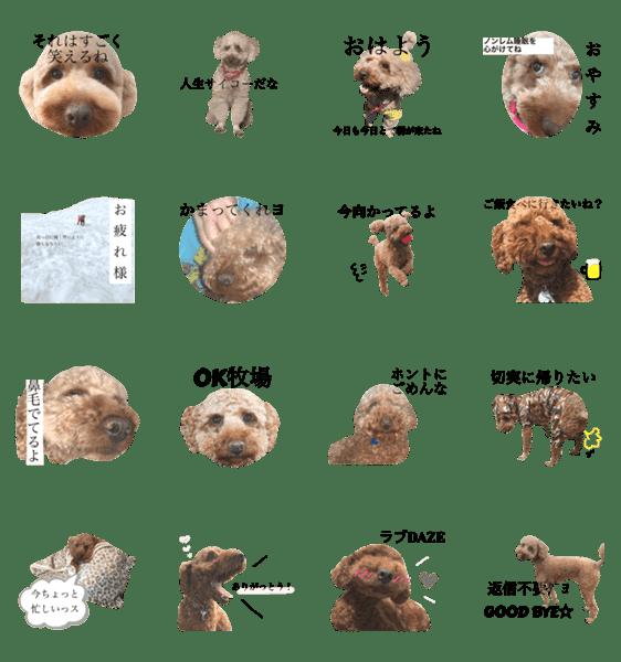 「うちの犬の使えるスタンプ」のLINEスタンプ一覧