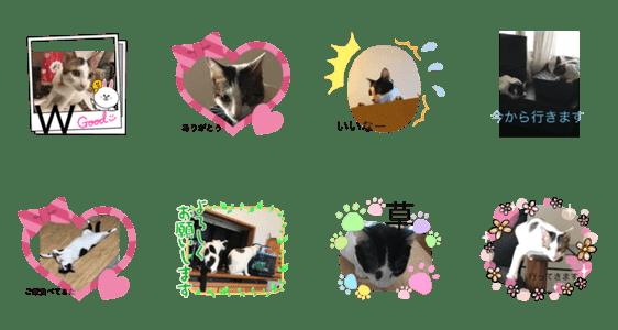 「使いやすくなって帰ってきた猫」のLINEスタンプ一覧