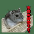 A hamster tono