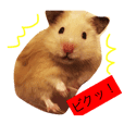 Sanpin is a male golden hamster.
