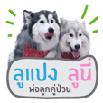 Lupang&Luney Husky Thailand