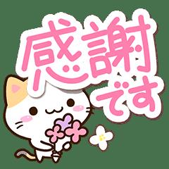 Small Cute Calico cat 27