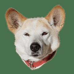 ジグザグ犬のベリーちゃん