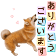 As expected! Shiba Inu [Almighty]