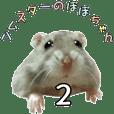 Hamster's popochan2