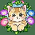 やさしい猫のポップアップ 5☆にゃつ(夏)