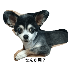OOKAMIGAOGAO_20210801142138