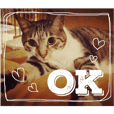 キジトラと三毛猫の日常使いスタンプ♪