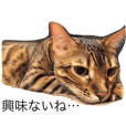 Bengal Cat CLOUD vol.1