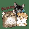 毎日使える3匹の猫たちのスタンプ