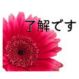 A floral message! Gerbera_politelanguage