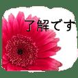 暮らしに花を♪ ガーベラ(敬語)