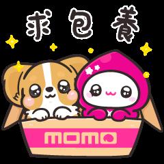 momoco × Corgi KaKa acting cute