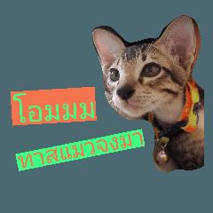 Homeless Cat Slave V.1